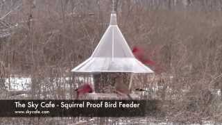 Squirrel Proof Bird Feeder - The Skycafe Bird Feeder