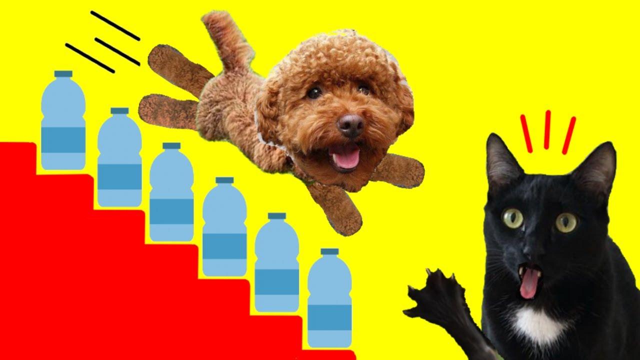 Gatos Luna y Estrella y mi perro vs el desafío de las botellas de agua / Videos de gatitos