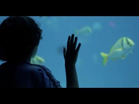 Hawaii's Aquarium Fish Industry In Deep Water
