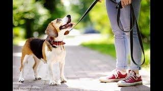 Жена пошла на прогулку с собакой а та привела её на адрес куда муж часто ездил в командировки