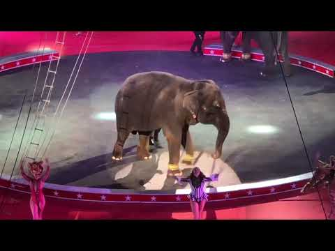 THE TRIPOLI SHRINE CIRCUS 🐘 2018 In MILWAUKEE, WI 🎪 LIVE Animal Tricks And FUN 🐯 Jen's Universe 💖