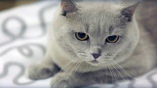 Кондиционеры для белья Wellery(Презентационное видео линейки кондиционеров премиум класса Wellery., 2015-08-20T06:27:25.000Z)
