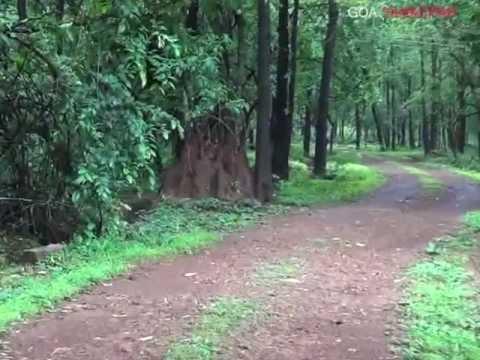 A walk at Mahavir Wildlife Sanctuary, Mollem Goa