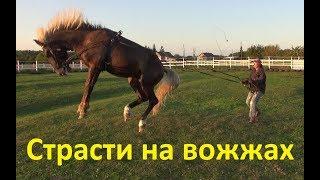 """Яхонт. Важность обучения лошади командам """"Стой"""" и """"Стоим""""."""