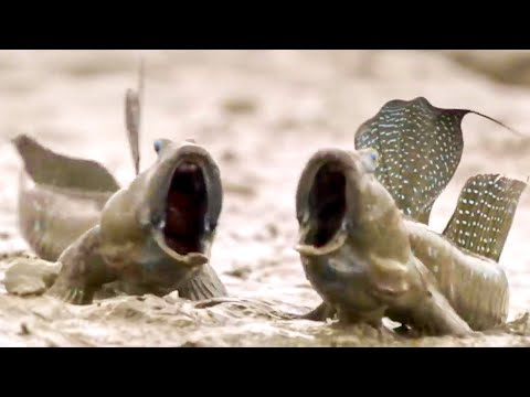 Top 5 Animal Adaptations   BBC Earth
