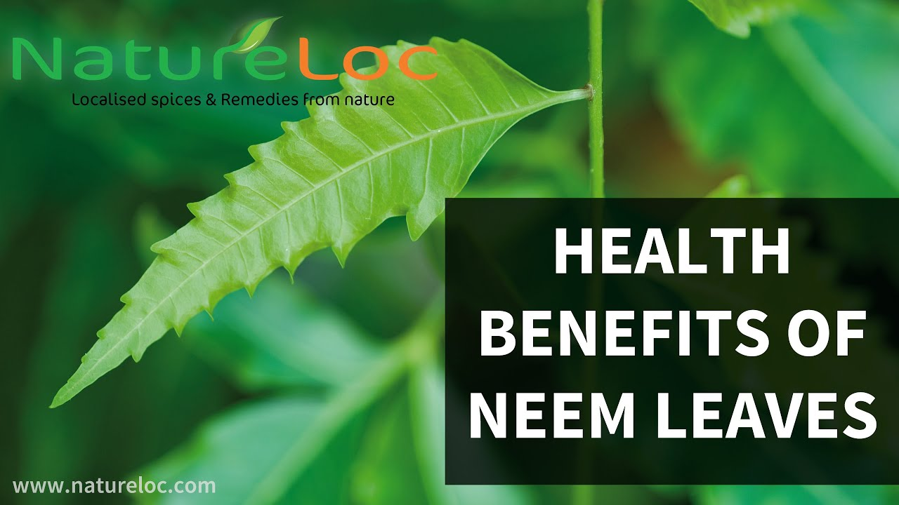 Health benefits of Neem| HB times