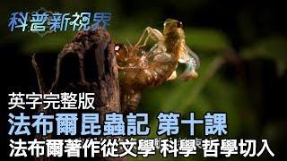 激昂的生命 | 法布爾透過文學、哲學等等角度,寫成了法布爾昆蟲記一書 【法布爾昆蟲記 第十課】全片線上看