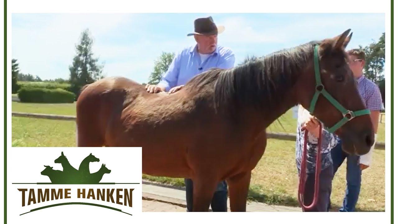 Mit tamme warzen pferd hanken Tamme Hanken
