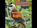 Masteran Therapy Trucukan Ropel Gemericik Air Dijamin Trucukan Anda Nyaut  Mp3 - Mp4 Download