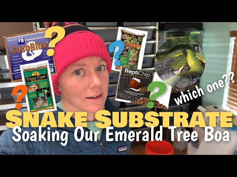 lets-talk-about-snake-substrate- -soaking-our-emerald-tree-boa