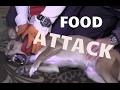 Dog Attacks Owners Over Food - Dog Whisperer BIG CHUCK MCBRIDE - SafeCalm Training Collars