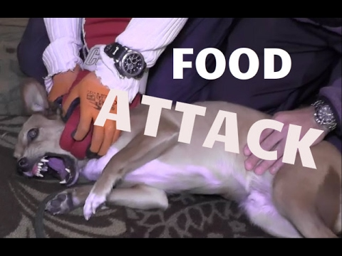 Dog Attacks Owners Over Food - Dog Whisperer BIG CHUCK MCBRIDE - SafeCalm Training Collars