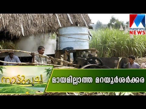 Jaggery and sugar cane from Marayoor  |  Nattupacha 15-10-2016  | Manorama News