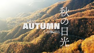 Japan, Nikko Autumn Leaves  秋の日光 خريف اليابان
