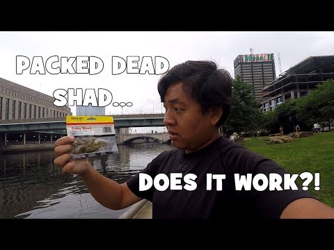 FISHING w/ My PATREONITES! Does PACKED DEAD SHAD Work for CATFISH?! (Philadelphia, PA)