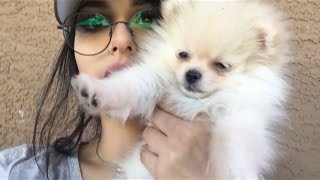 luna and sssniperwolf cute and funny moments