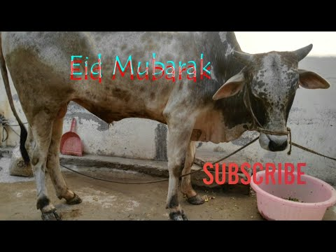 Eid-ul-adha   Eid Day 1   Qurbani   VLOG #74  