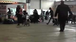 2012 DKK Herning - Zalazar Goes WIld
