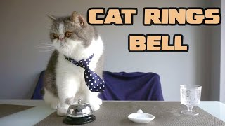 Cat Rings Bell for Food