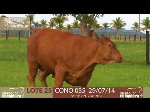 LOTE 25 CONQ 35