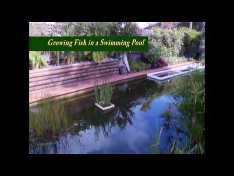 Converting our swimming pool to a swimming pond part 1 for Koi pond swimming pool conversion
