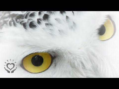 Reiki for the Eyes | Eyesight & Vision | Energy Healing
