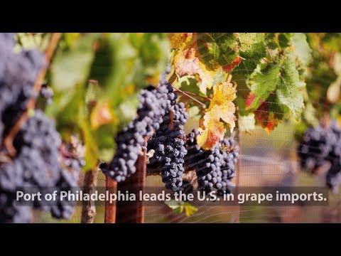 Trade Matters: Port of Philadelphia and Grapes