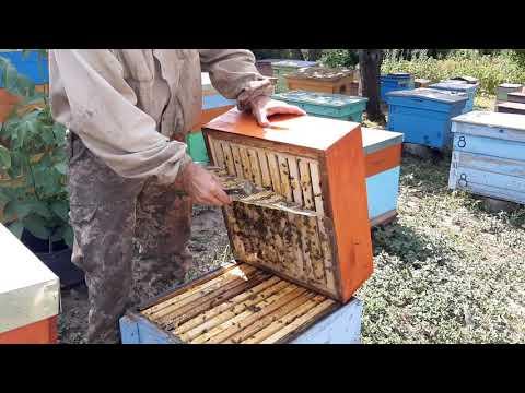 Заливаемся подсолнечниковым мёдом.  15.07.19