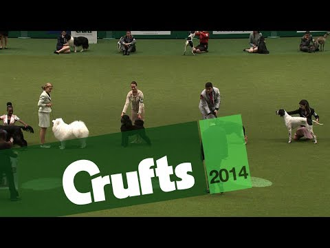 International Junior Handling Competition | Final Judging | Crufts 2014