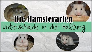 Hamster Info || Die Hamsterarten und ihre Unterschiede in der Haltung