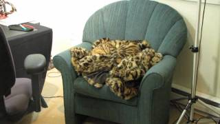 Perfect Cat Camoflage - You Can