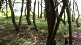 sitios mágicos - bosque das borboletas