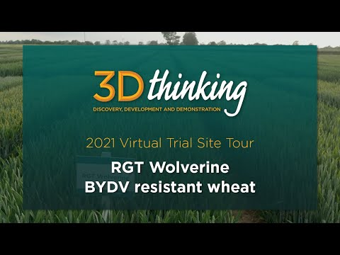 RGT Wolverine: BYDV resistant wheat - 2021 virtual trial site tour   3D Thinking