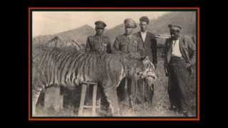 Top Ten Recently Extinct Animals