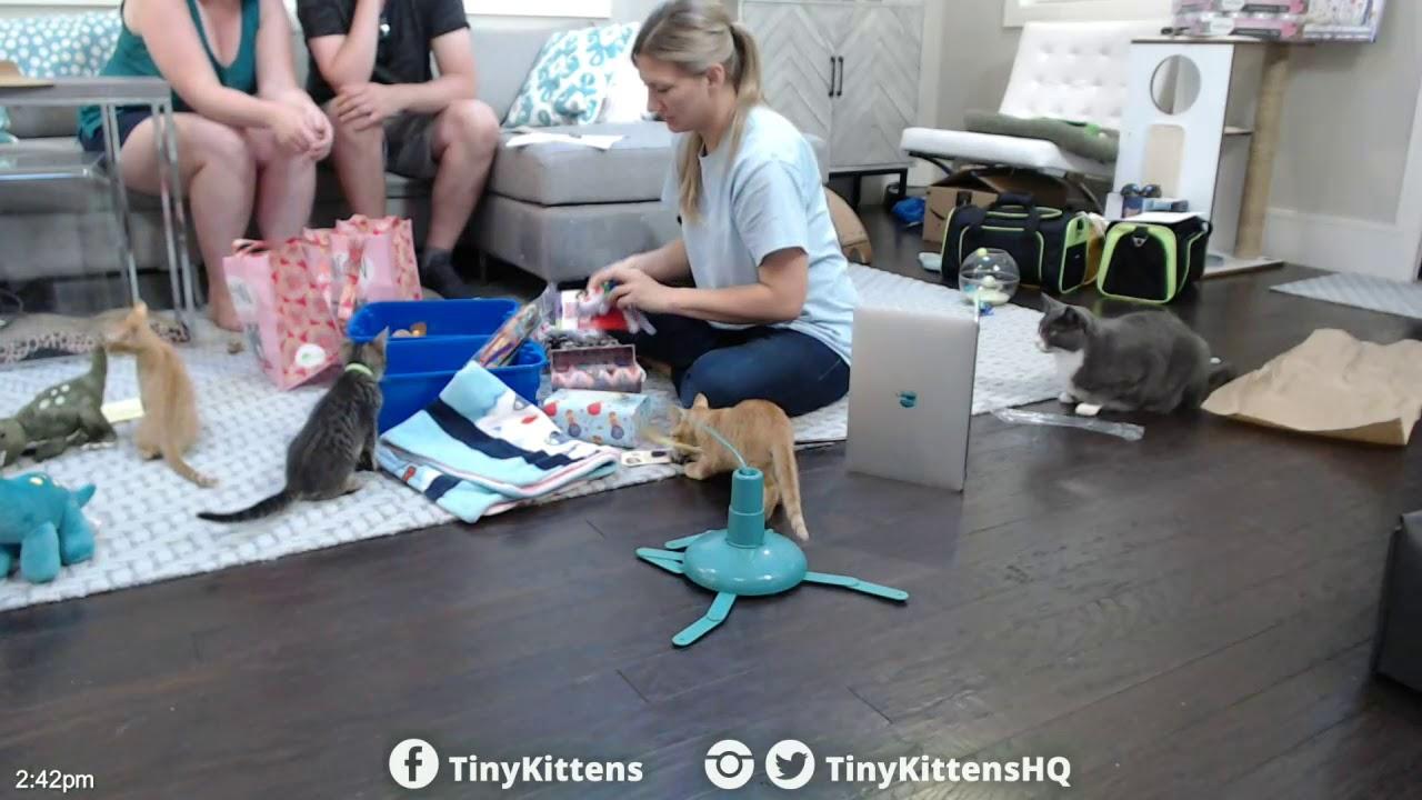 B-Rex and Nakia's #TinySuitcases and Bon Voyage!  TinyKittens.com