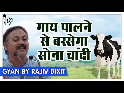 Rajiv Dixit - एक गाए आपको बना सकती है करोड़पति देखिये कैसे ? | Cow Can Make You Millionaire!