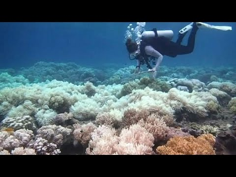 Australia pledges millions to save the Great Barrier Reef Mp3