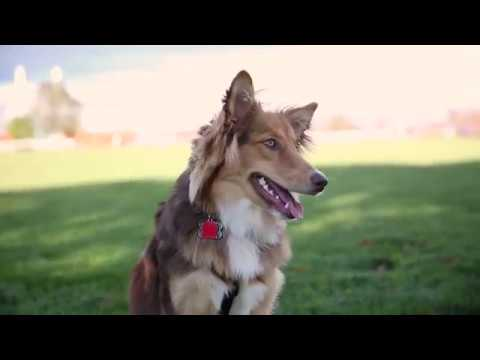 Dogumentary: A film about (working) dogs