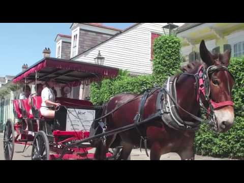 Royal Carriages Authentic Mule-Drawn Carriage Tours  In New Orleans