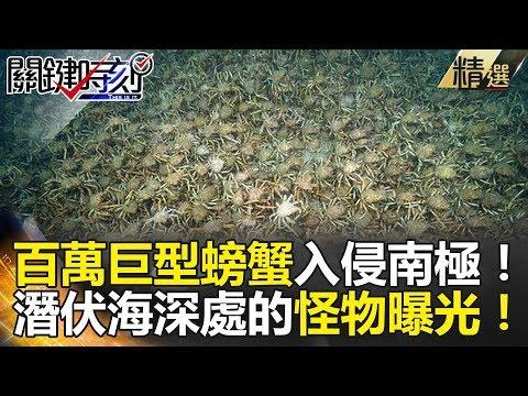 百萬巨型螃蟹入侵南極! 潛伏海底深處的怪物曝光! -
