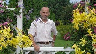 Как сохранить розы зимой Николай Дементьев