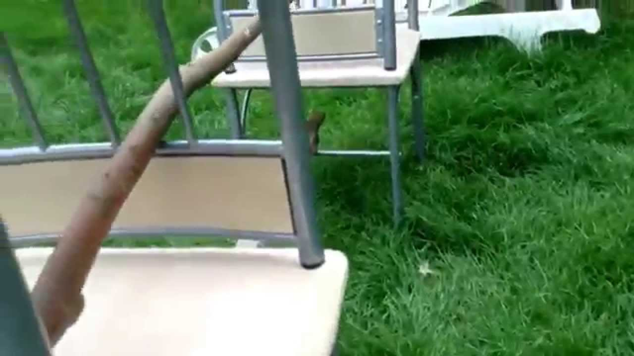 simple homemade build your own jumping obstacle for your dog