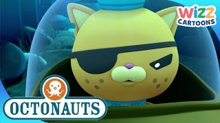 Octonauts | Keeping the Urchins Under Control | Compilation | Wizz Cartoons