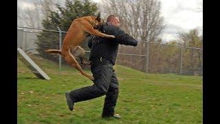Этот жест нельзя показывать своим домашним животным!!!!!!! Нападение животных!!!!!!