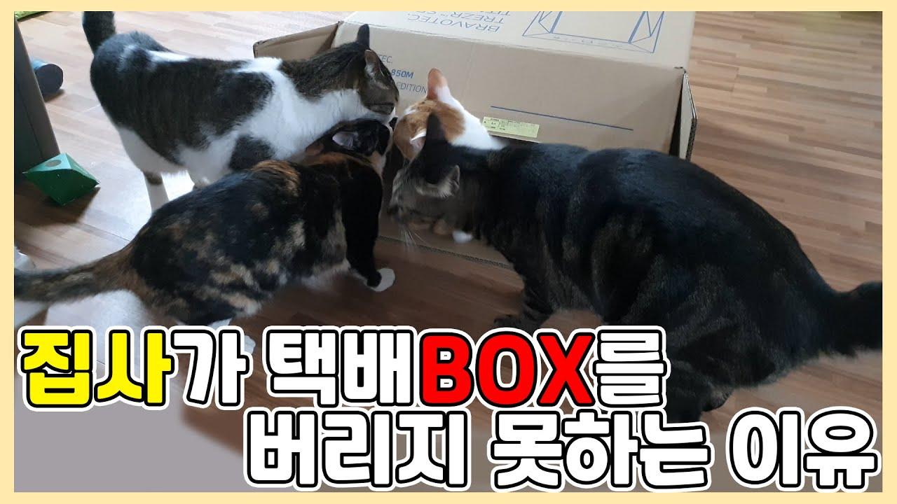 택배 박스는 고양이들의 장난감이다옹!