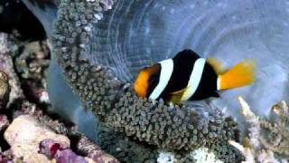 Fishes under the sea - If I Believed in Paradise By Carol Banawa.wmv