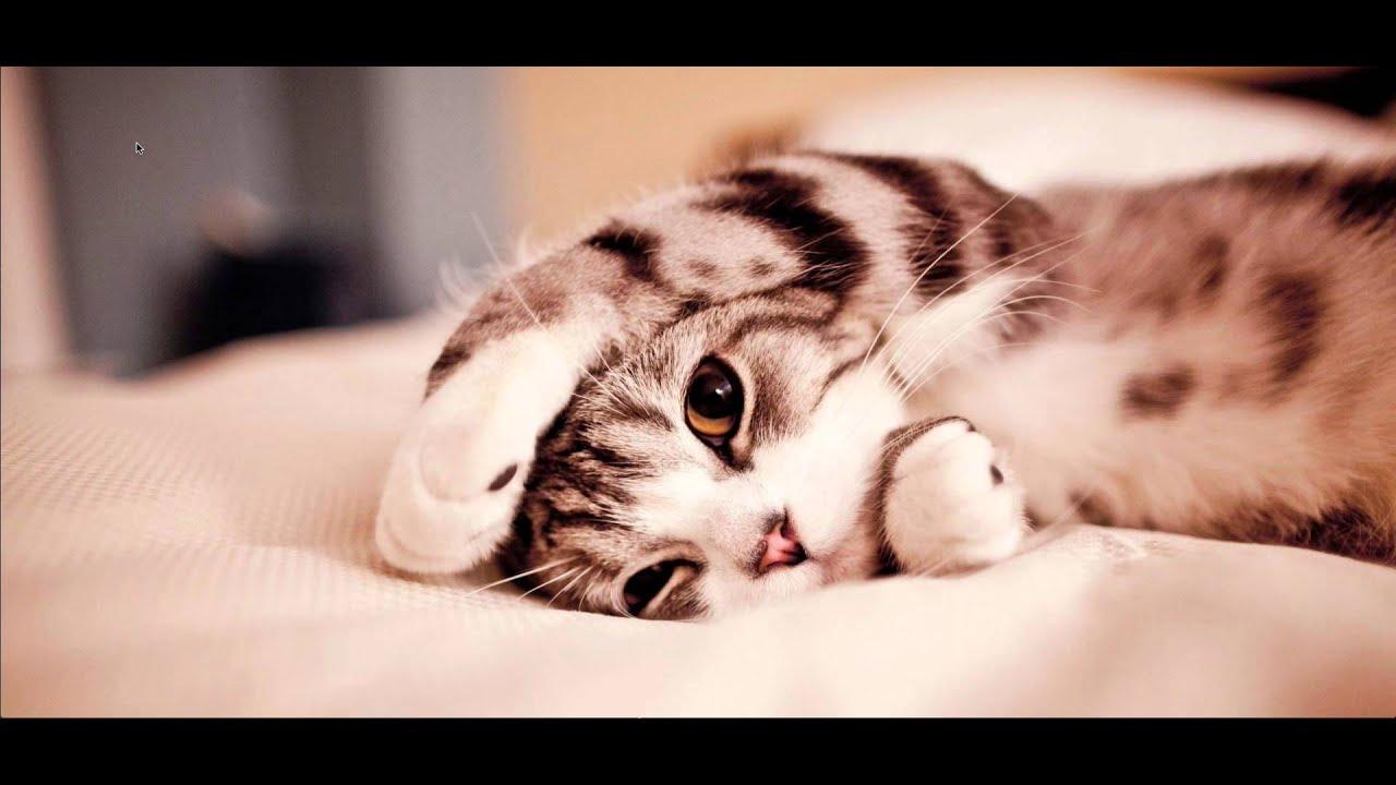 Cute Kitten Yawning - YouTube