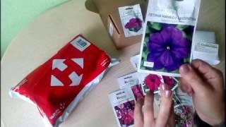 Обзор семян петунии и луковицы лилий.Раскрываю посылки!