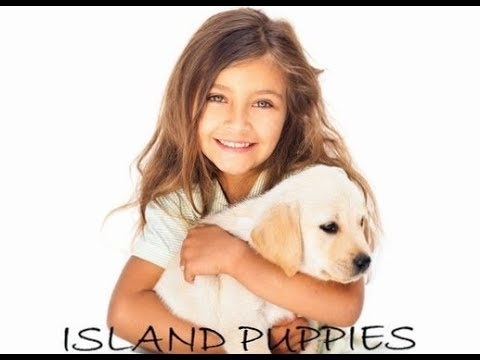 Puppies For Sale | Long Island – Island Puppies