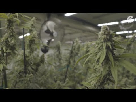 Vermont legalized weed, but it may not end the state s black market HD 1080   WEB H264 4000